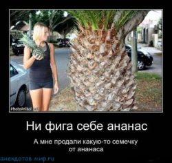 Анекдоты про ананас