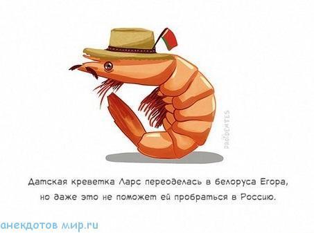 Анекдоты про креветки