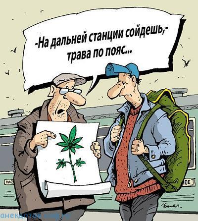 Лучшие анекдоты про наркоманов