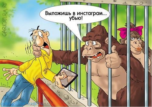 анекдот про гориллу