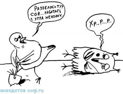 анекдот про жаворонка