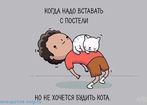 веселая история про кота