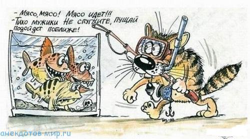 Свежие истории про котов и кошек