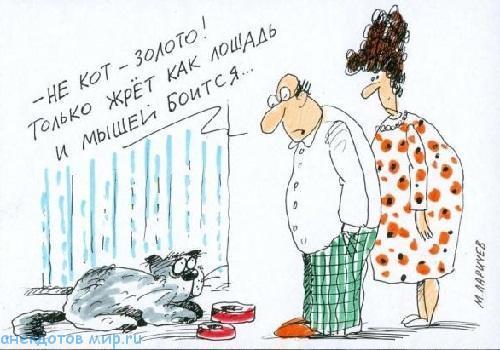 смешная история про кота