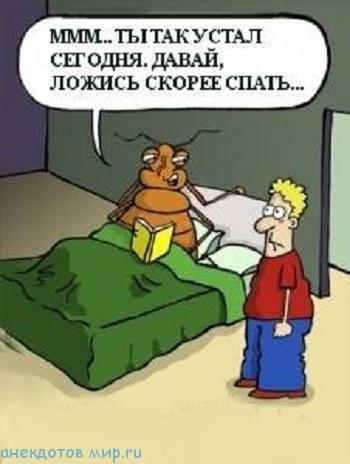 Смешные анекдоты про клопов