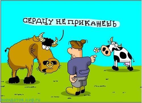 лучший анекдот про колхоз
