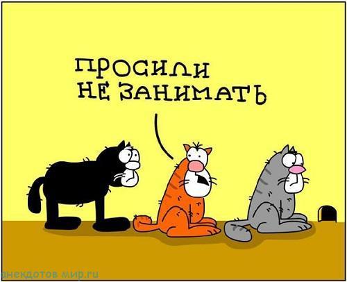 смешной анекдот про котят