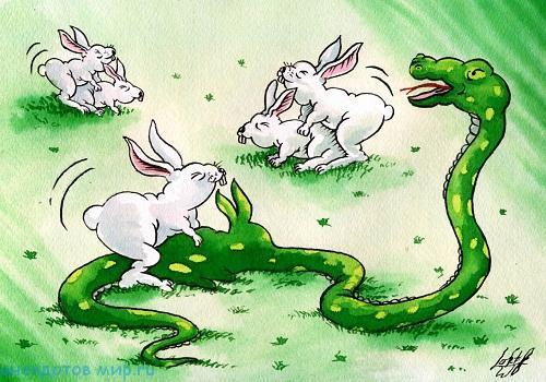 Смешные анекдоты про кроликов