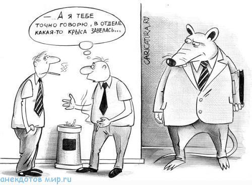 смешной анекдот про крысу