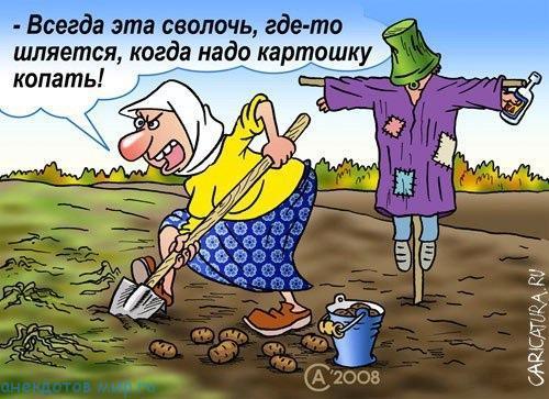 Свежие анекдоты про огород