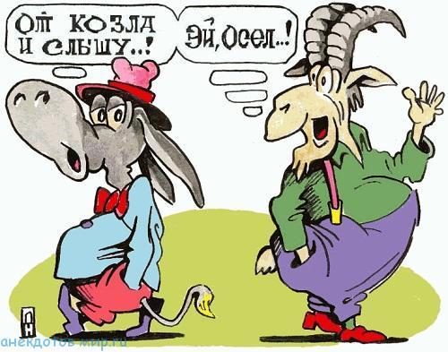 Смешные анекдоты про осла