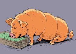 Анекдоты про свинью