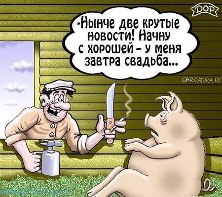 самый смешной анекдот про свинью