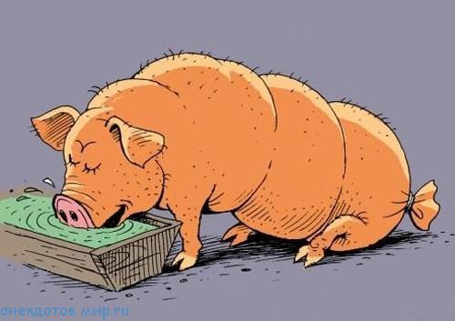 анекдот про свинью