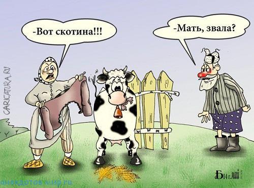 свежий анекдот про скотину