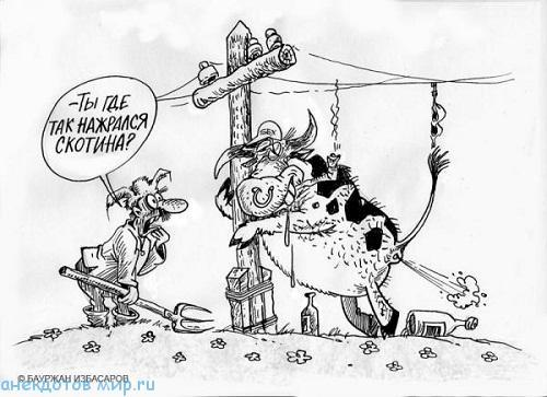 анекдот про скотину