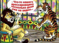 Смешные до слез анекдоты про цирк