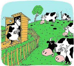 Анекдоты про ферму
