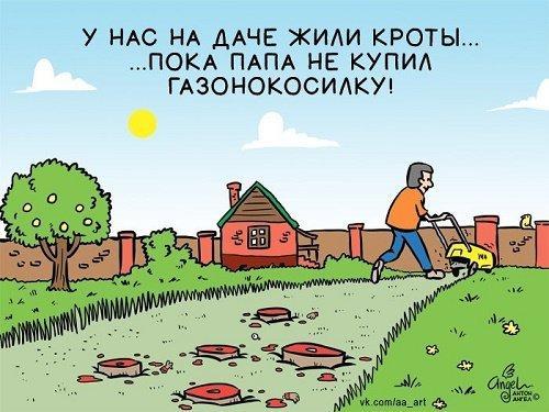 Новые анекдоты про деревню