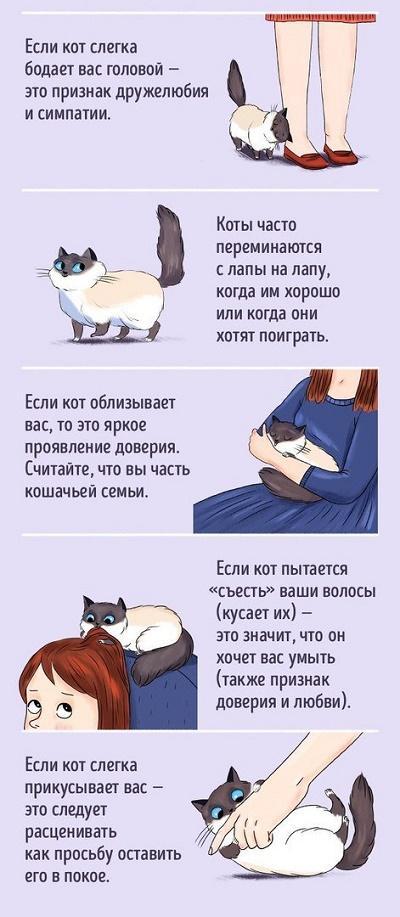 как найти общий язык с котом