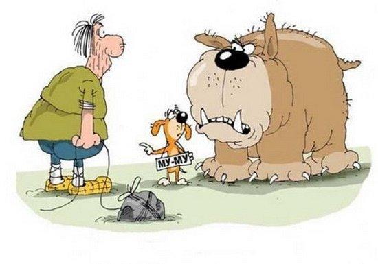 юмор про собак