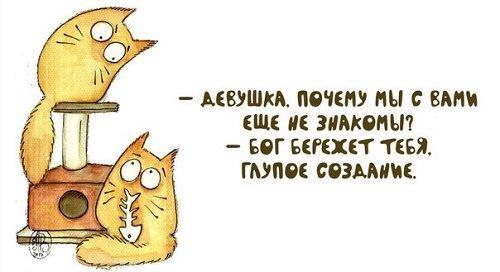 Read more about the article Короткие смешные цитаты