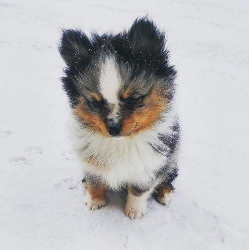 щенок очаровашка