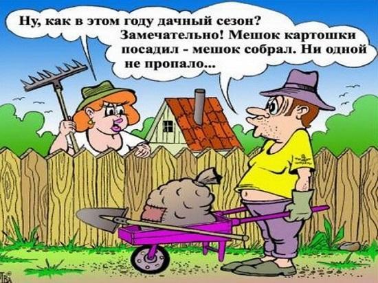анекдоты про дачу и огород