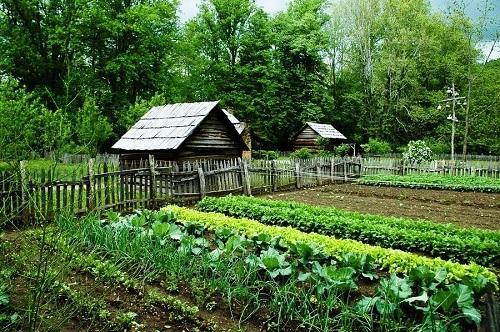 смешные стихи про дачу и огород