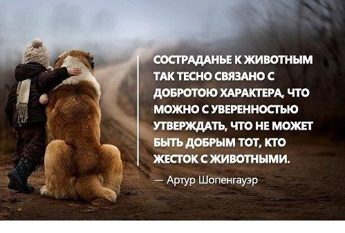 Цитаты о животных