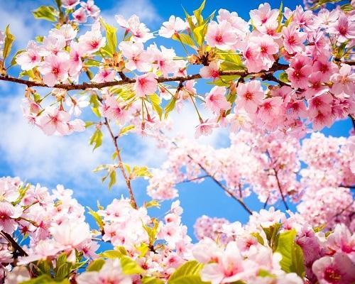 Немного пошлые стихи про весну
