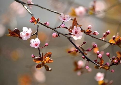 Неприличные стихи о весне