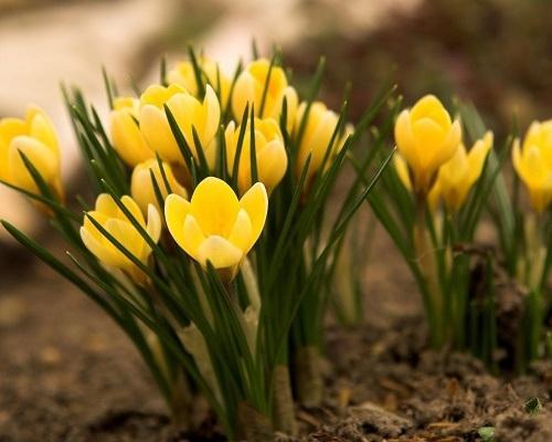Пошленькие стихи про весну