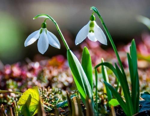 Слегка пошлые стихи про весну