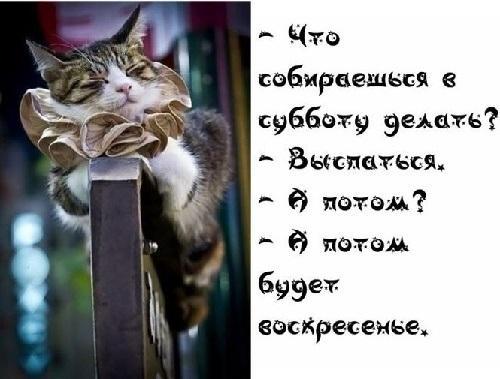 субботние анекдоты 11.01.2020