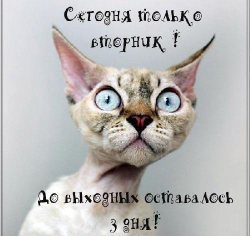 Read more about the article Анекдоты вторника 10 марта 2020 года