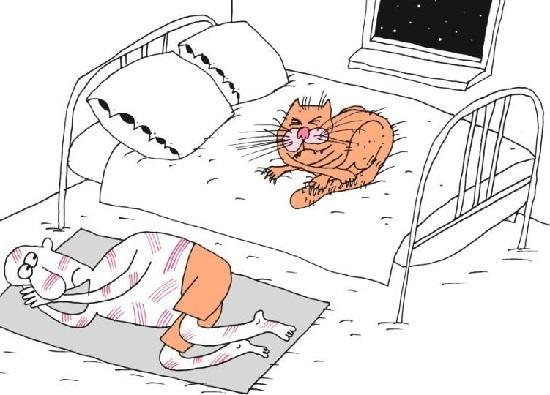 анекдоты про ночь и утро