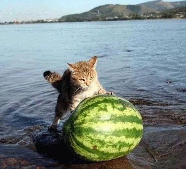 ржачная картинка про лето