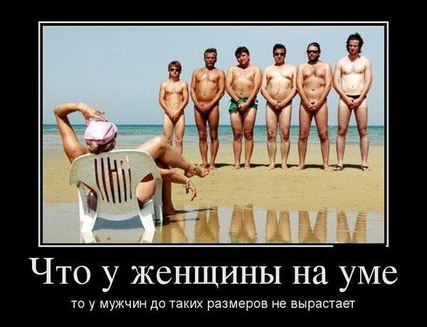 смешное лето на картинке