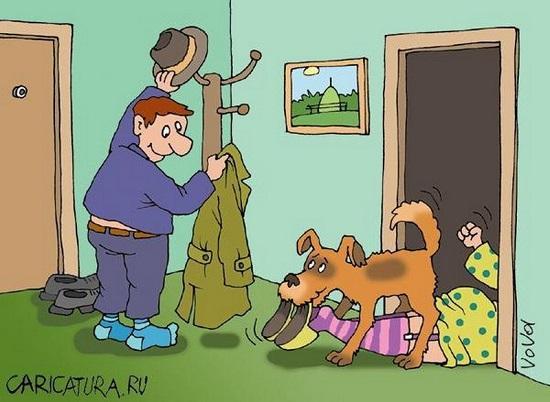 анекдоты про собаку и друга