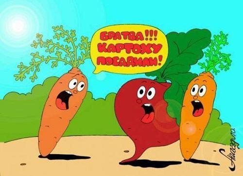 Анекдоты – картинки про овощи и фрукты