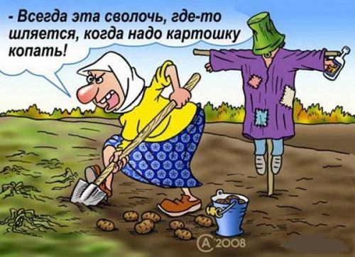Анекдоты – картинки про поваров и картошку