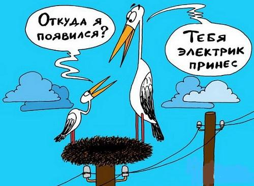 Анекдоты – картинки про птиц
