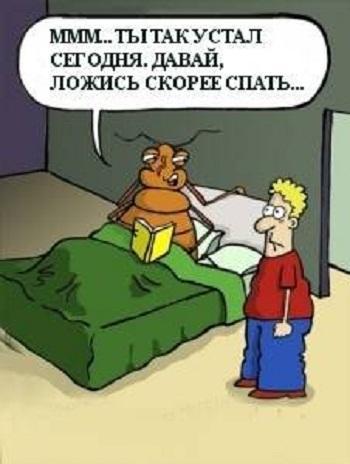 смешной анекдот картинка про насекомых