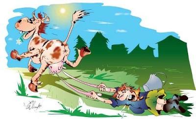 анекдот картинка про корову и быка