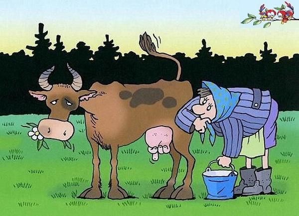 анекдоты про молоко и корову