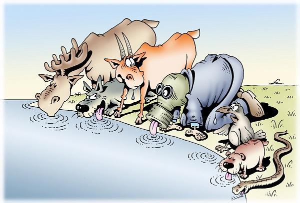 Read more about the article Анекдоты про животных самые смешные