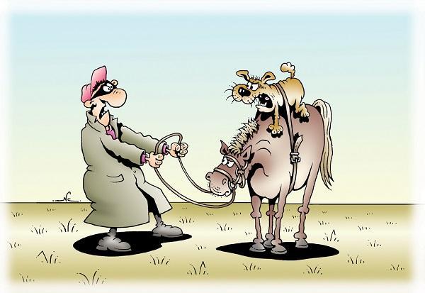 анекдоты про животных смешные