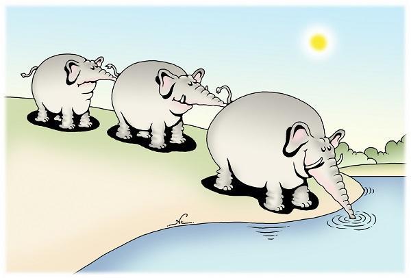 анекдоты с животными