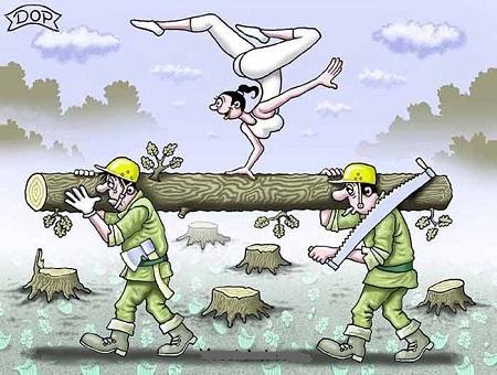 анекдот картинка про доски и дрова